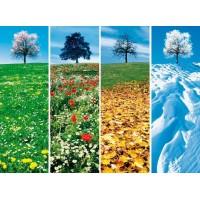 Aliment toutes saisons