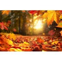 Aliment d'automne