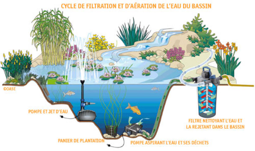 Bassin a poisson rouge for Plante aquatique bassin exterieur