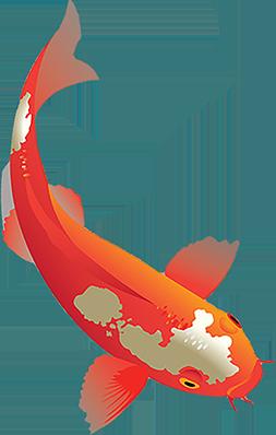 Bassin a poisson rouge for Entretien bocal poisson